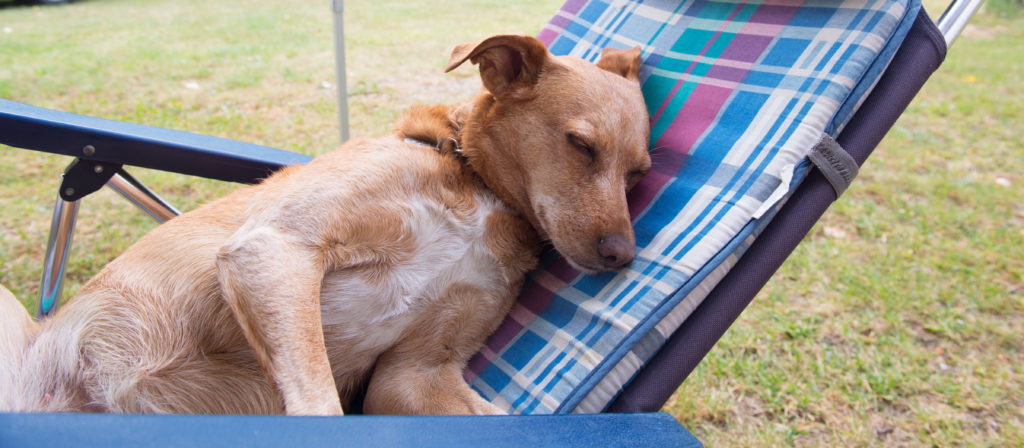 Dogs need their own camping chairs so that everyone has a place to sit!