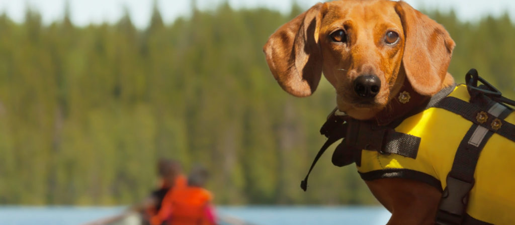 Take your puppy out on the water for an incredibly unique experience.