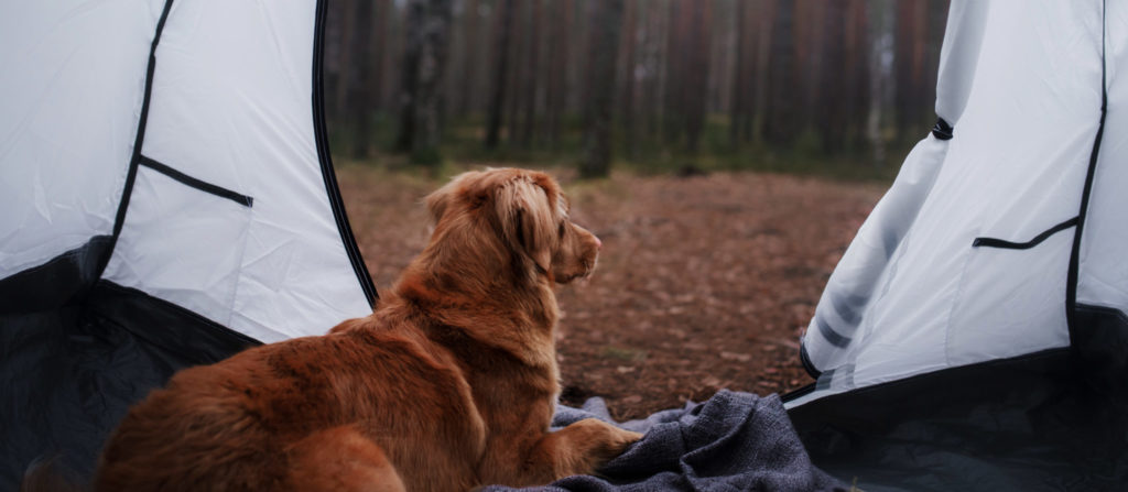 Relax with your puppy and always follow the rules. Enjoy dog friendly camping Michigan.