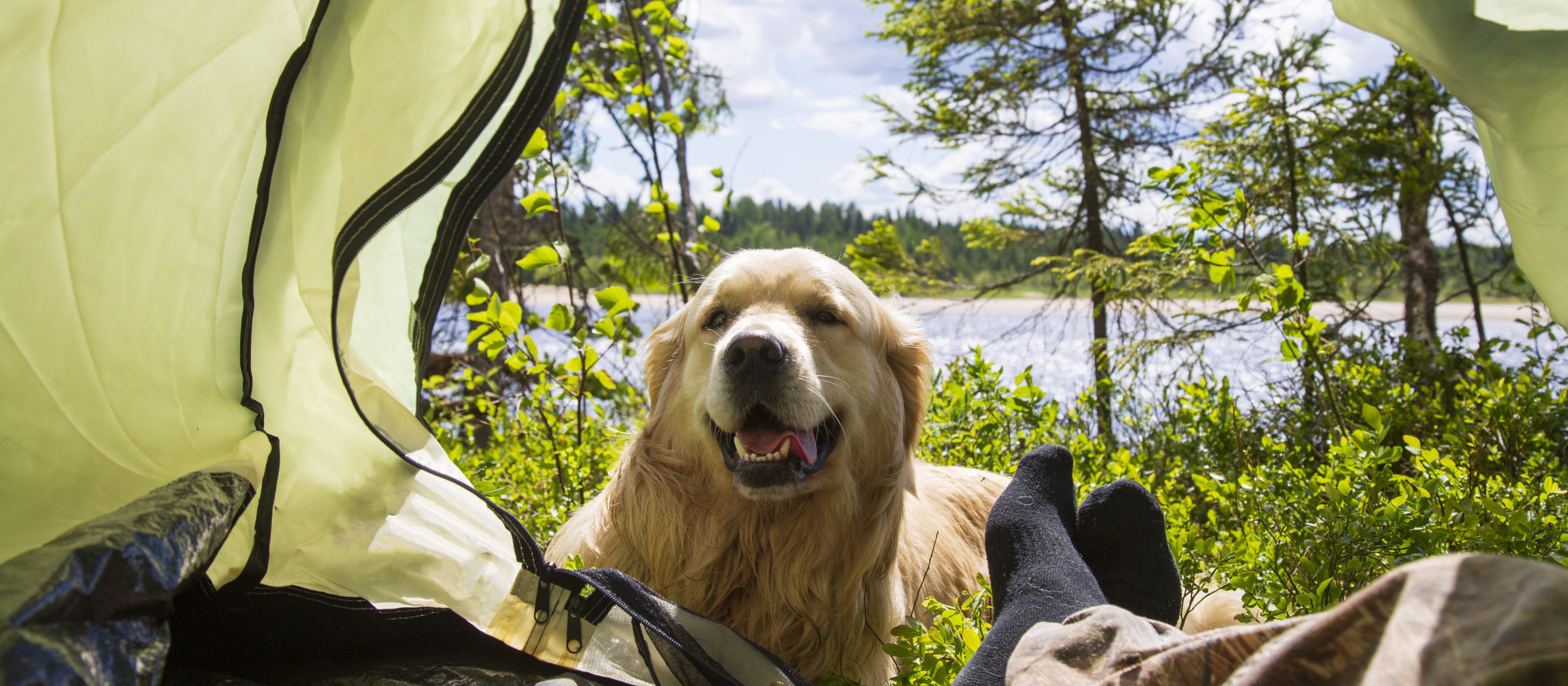Camping with a Dog in a Tent